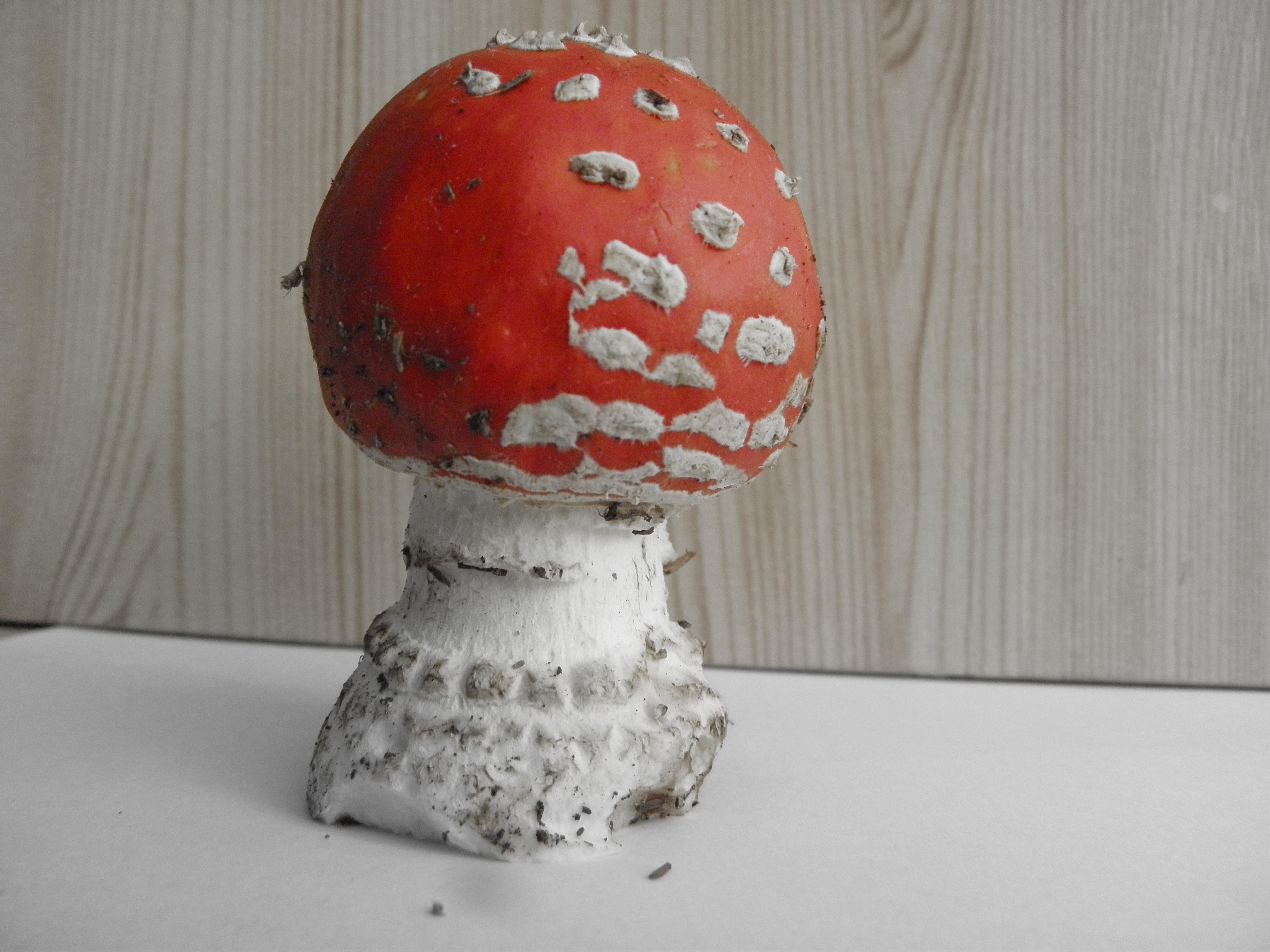Výsledná houba